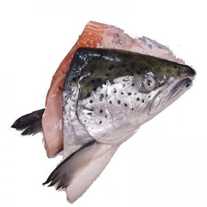 FRESH-SALMON-HEAD
