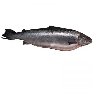 FRESH-SALMON-WHOLE-4-5