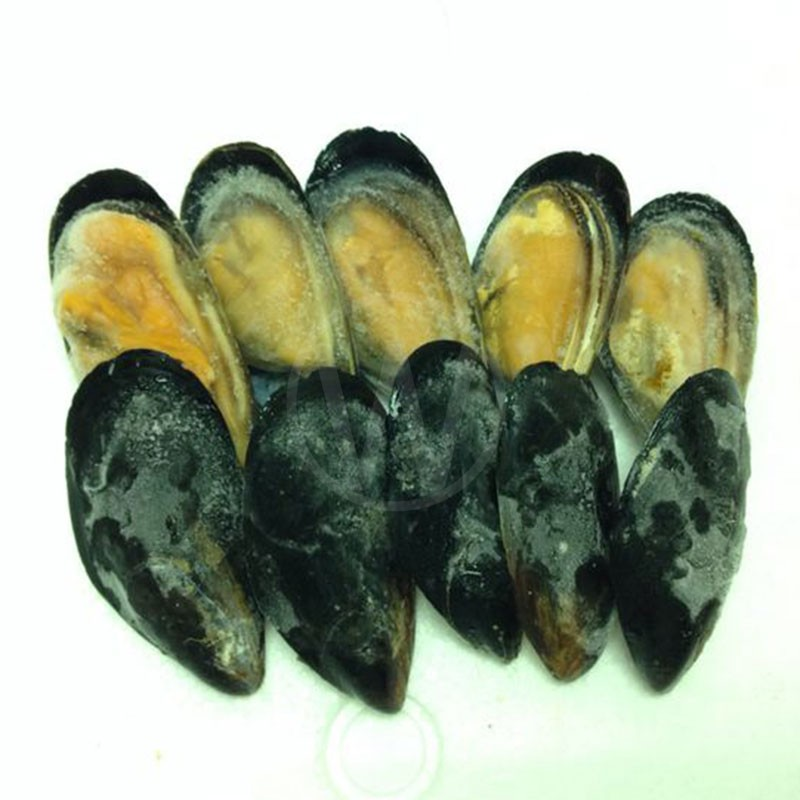 HALF-SHELL-BLACK-MUSSEL-