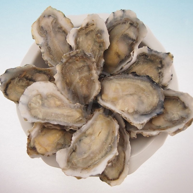 HALF-SHELL-OYSTER